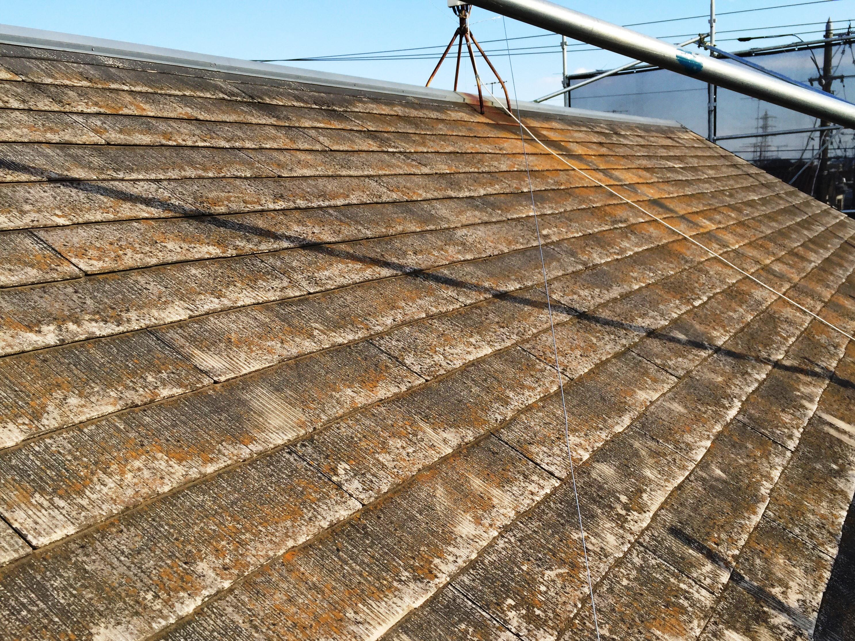 放置NG!屋根に生えるコケの原因・対処と再繁殖を防ぐメンテナンス