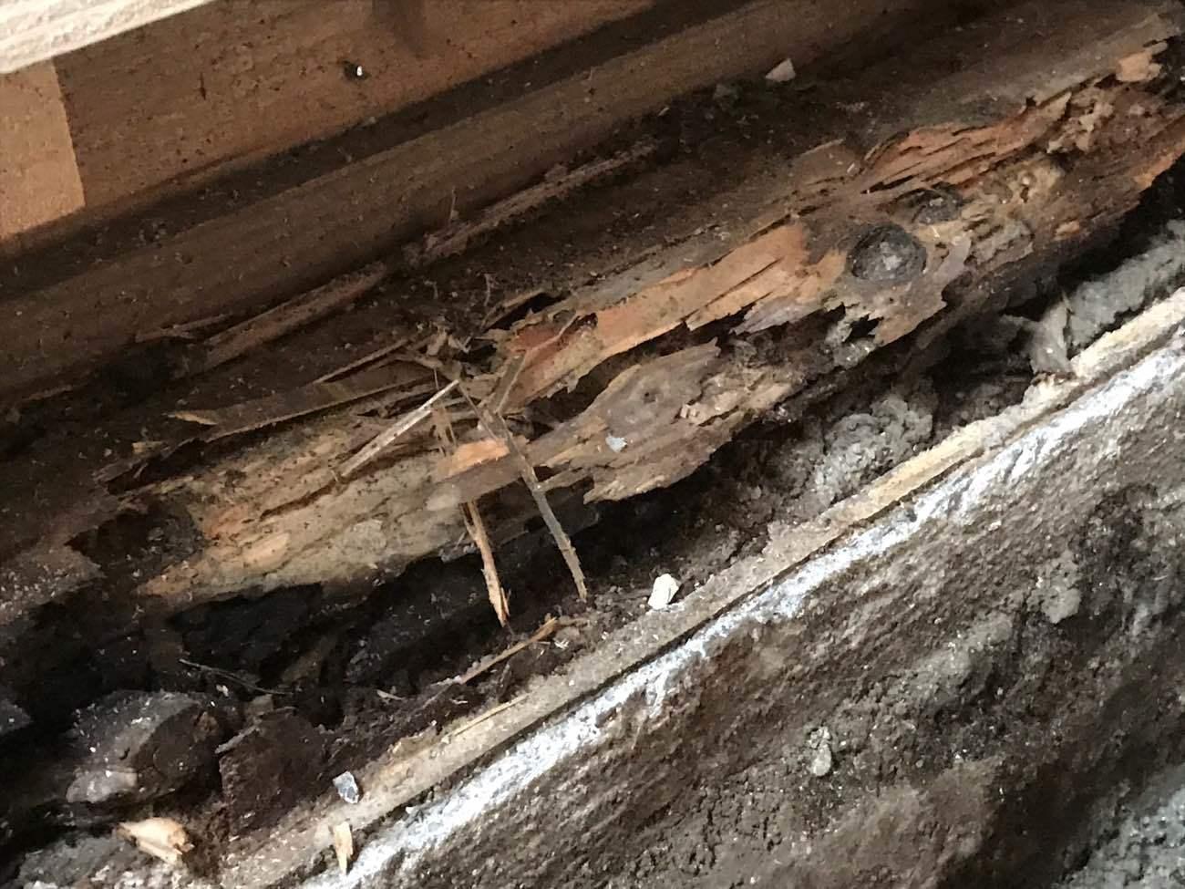 住まいの大敵『腐朽菌』とは|繁殖条件とお家を守るための4つの対策