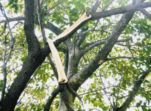 枝が折れる