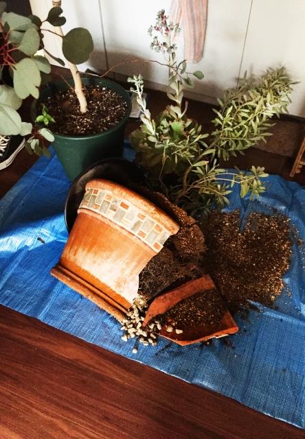 割れた植木鉢