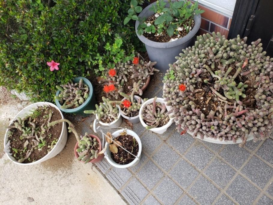 外壁塗装の植木・鉢植えトラブルを防ぐ!汚れ・破損から守る対策3つ